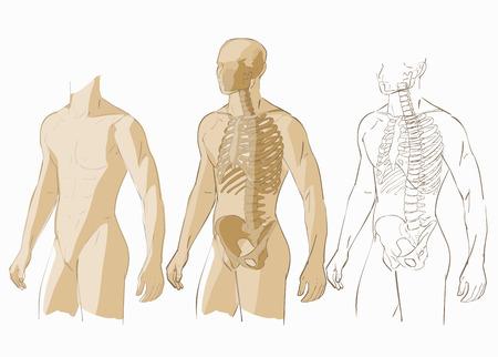 Menschliche Körperteile Skelett Mann Anatomie Illustration Isoliert ...