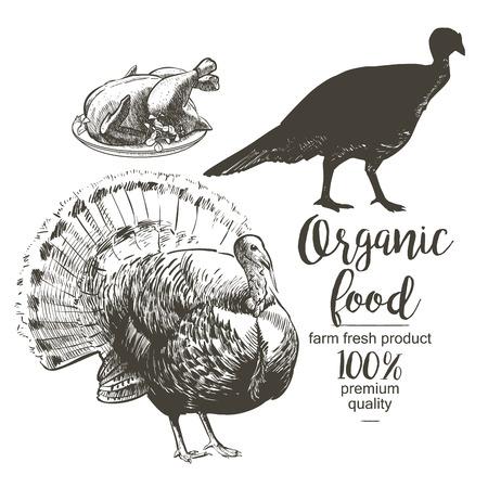 Roasted Turkey - Vector engraved illustration in vintage style