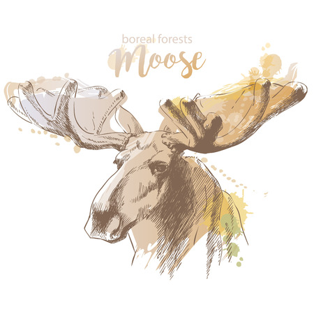 moose head with huge antlers sketch vector illustration isolated on white background. Christmas animal