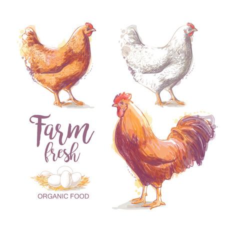 鶏。ロースト チキン。ビンテージ スタイルのベクトル図