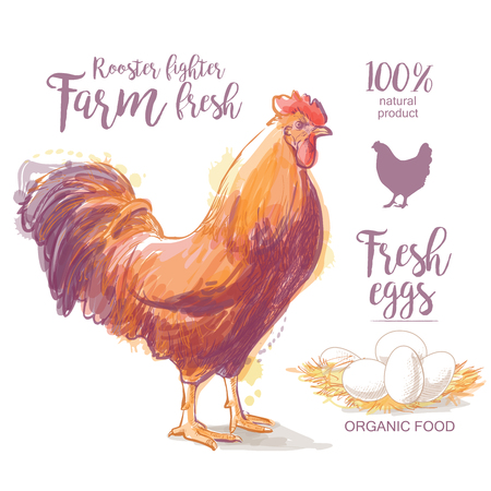 Chicken, hen, rooster, cock, cockerel and farm Vector illustration in vintage style Illustration