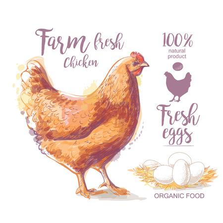 Chicken. Roasted Chicken. Vector illustration in vintage style