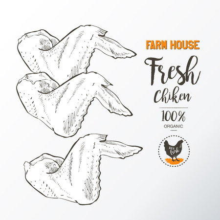 drown: Fresh chicken wings. Top view. Isolated on a white vintage vector isolated sketch hand drown