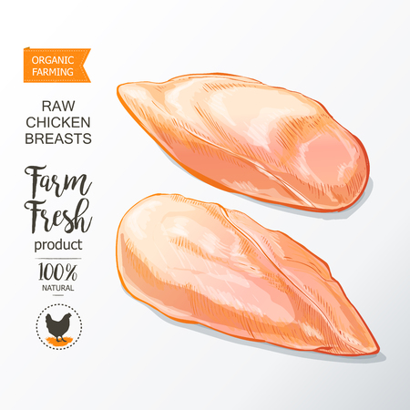 Fresh chicken breast. Top view. Isolated on a white vintage vector isolated sketch hand drown Illustration