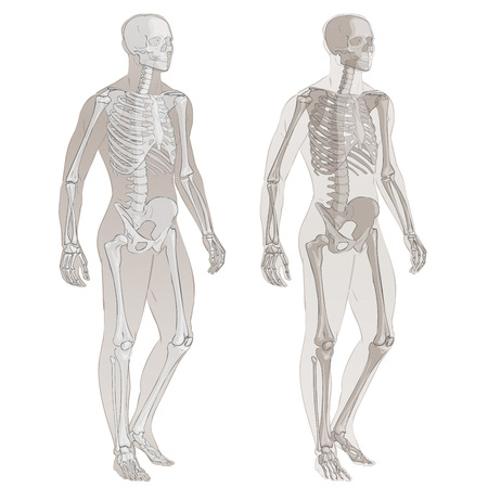 Human body parts skeletal man anatomy vector illustration isolated Ilustrace