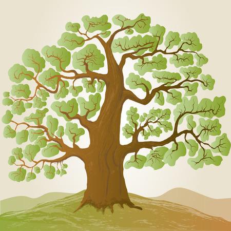 vector oak tree