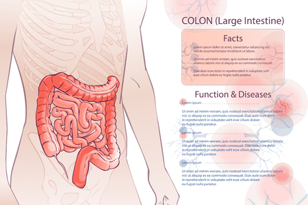 Diagram illustration of the human colon with information template. Stok Fotoğraf - 95737355