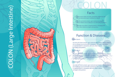 Diagram illustration of the human colon with information template.