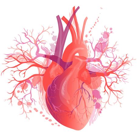 Vector realistic Human heart Vector Illustration
