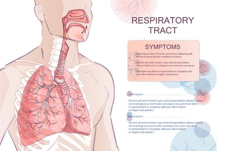 vector menselijke ademhalingssysteem