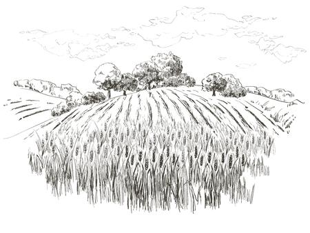 Landelijk landschap veld tarwe. Hand getekende vector platteland landschap gravure stijl illustratie.