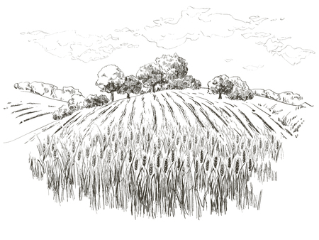 Rural landscape field wheat. Hand drawn vector Countryside landscape engraving style illustration.