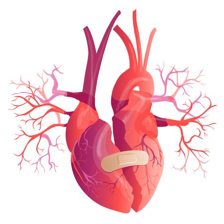 Vector realistic Human heart. Anatomy concept. illustration Illustration