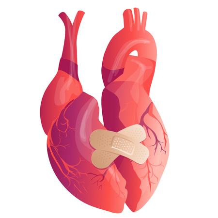 Vector realistic Human heart. Anatomy concept. illustration 写真素材 - 122206649