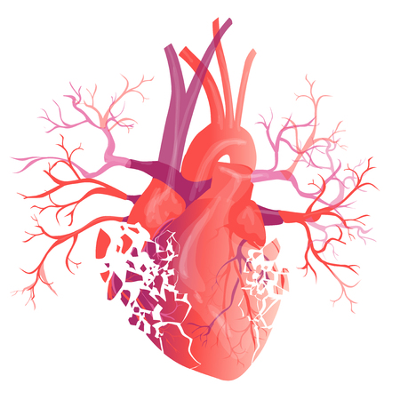 Vector realistic Human heart. Anatomy concept. illustration Illustration