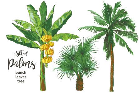 Palmeras de plátanos tropicales, hojas, colección de textura de follaje de frutas. Diseño vintage para banner, textil, papel tapiz. Ilustración acuarela de vector. Ilustración de vector