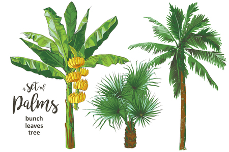Tropical bananas palm trees, leaf, fruits foliage textural collection. Vintage design for banner, textile, wallpaper. Vector watercolor illustration.