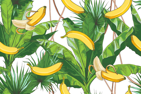 Tropical bananas palm trees with growing bunch, leaf, fruits, ripe cluster peeled, foliage textural seamless pattern. Nature background. Vector vintage design  イラスト・ベクター素材