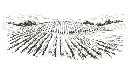 Vine hills landscape. Vector line sketch illustration