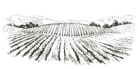 Weinhügellandschaft. Vektorlinienskizze Abbildung