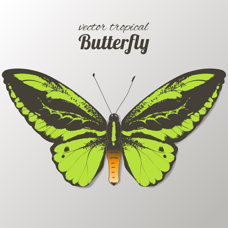 Vector illustration of watercolor butterflies. Hand drawn isolated. Vector watercolor. 写真素材 - 123753265