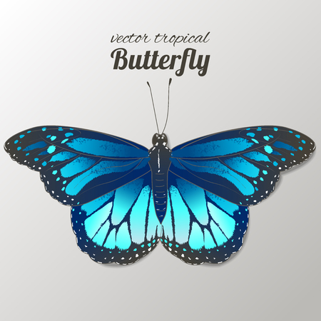 Vector illustration of watercolor butterflies. Hand drawn isolated. Vector watercolor.  イラスト・ベクター素材