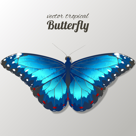 Vector illustration of watercolor butterflies. Hand drawn isolated. Vector watercolor. 写真素材 - 123753268