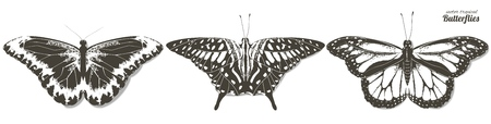 Vector illustration of black and white line butterflies. Hand drawn realistic isolated illustration. Ilustrace