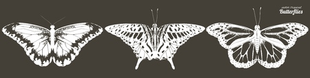 Vector illustration of black and white line butterflies. Hand drawn realistic isolated illustration.  イラスト・ベクター素材