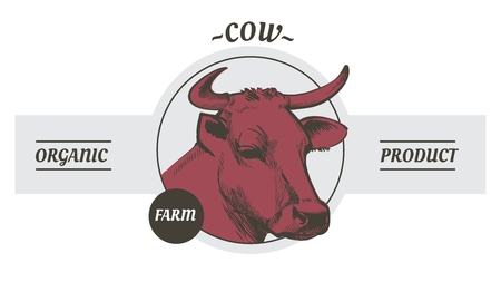 Cow in graphic line style, hand drawing vector image Ilustrace