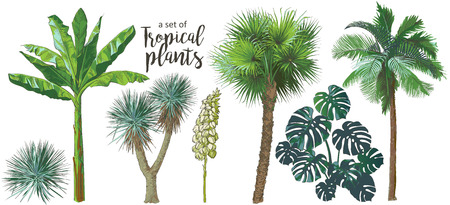 A set of Tropical bananas palm trees, monstera, yucca, leaf, fruits foliage collection. Vector watercolor realistic illustration. Vintage design Ilustrace