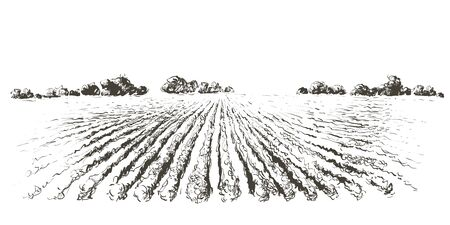Rural landscape field . Hand drawn vector illustration. Countryside landscape. Engraving style Иллюстрация