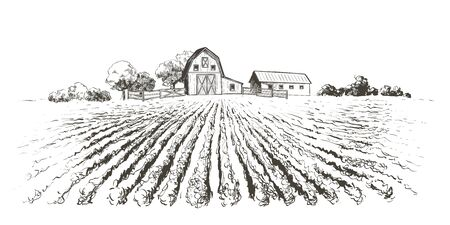 Rural landscape field . Hand drawn vector illustration. Countryside landscape. Engraving style Illusztráció