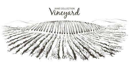 Vine hills landscape. Vector line sketch illustration