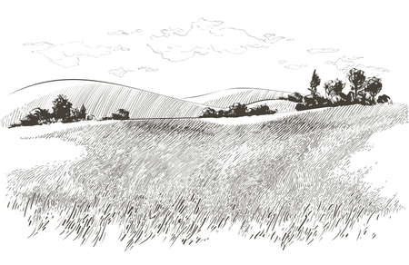 Vector sketch Green grass field on small hills. Meadow, alkali, lye, grassland, pommel, lea, pasturage, farm. Rural scenery landscape panorama of countryside pastures. illustration