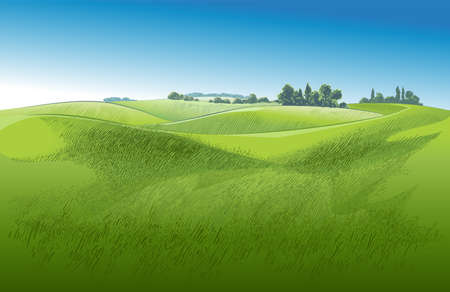 Vector Green grass field on small hills. Meadow, alkali, lye, grassland, pommel, lea, pasturage, farm. Rural scenery landscape panorama of countryside pastures. illustration