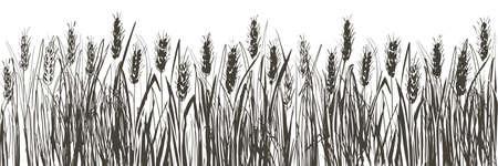 Vector rural summer landscape a field of ripe wheat on hills 向量圖像