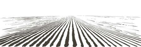 Vector farm field landscape. Furrows pattern in a plowed prepared for crops planting. Vintage realistic engraving sketch illustration. Ilustracje wektorowe