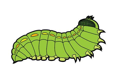 lepidoptera: Green caterpillar butterfly - larval form of the lepidoptera consisting of the moths and butterflies vector illustration