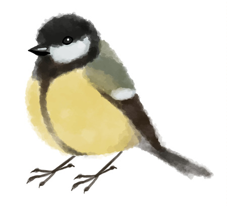 Watercolor illustration tit or titmouse - Hand drawn vector illustration