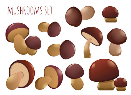 Edible mushrooms autumn - set of different mushrooms vector elements for design