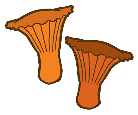 edible: Edible mushrooms autumn - vector elements for design