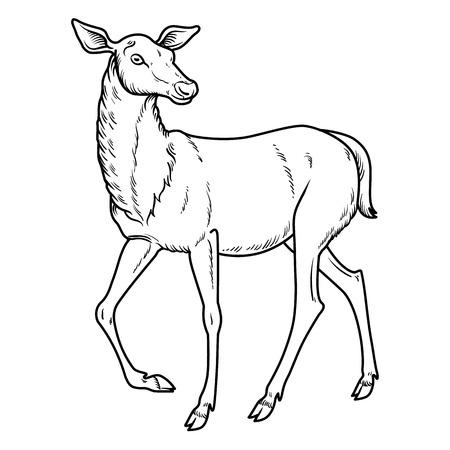 dappled: Elegant sika deer goes - vector illustration