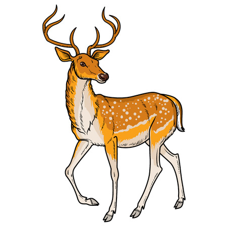 goes: Elegant sika deer goes - vector illustration