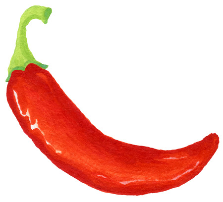 pungent: painting of red hot pepper  - watercolor vector illustration fresh organic food
