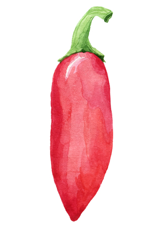 allspice: painting of red hot pepper  - watercolor vector illustration fresh organic food
