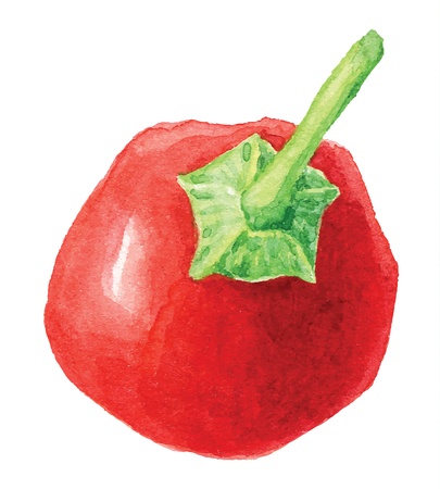 bell pepper: painting of bell pepper  - watercolor vector illustration fresh organic food