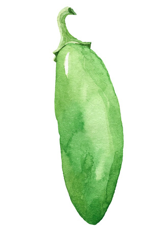 painting of hot pepper  - watercolor vector illustration fresh organic food