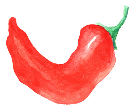 painting of red hot pepper  - watercolor vector illustration fresh organic food