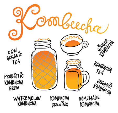 Kombucha (Hongo) in different glass containers - Natural homemade healthy drink for health - hand drawing vector illustration